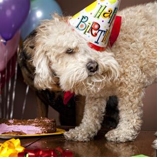 Doggy Birthday Party