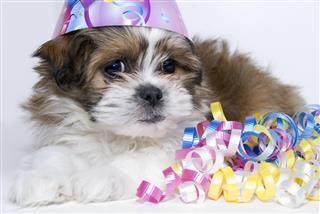 Birthday Puppy Series