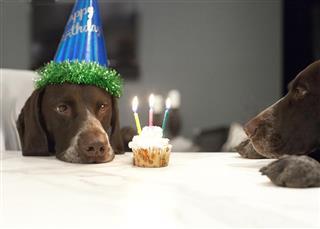 Bran birthday cupcake