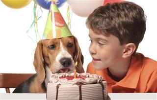 Beagle Birthday Party