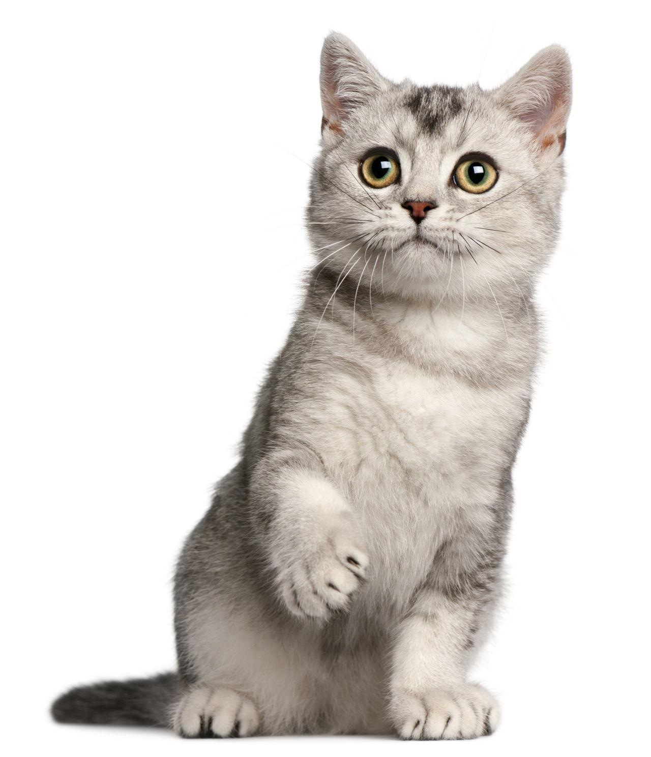List Of Cute Calico Cat Names