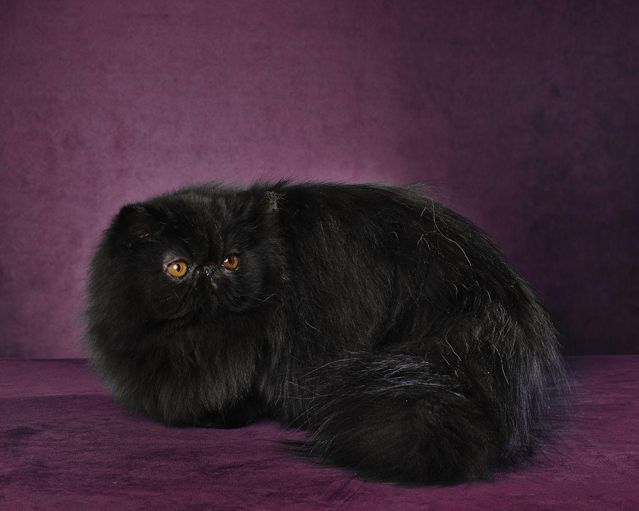 Hawaiian Female Cat Names