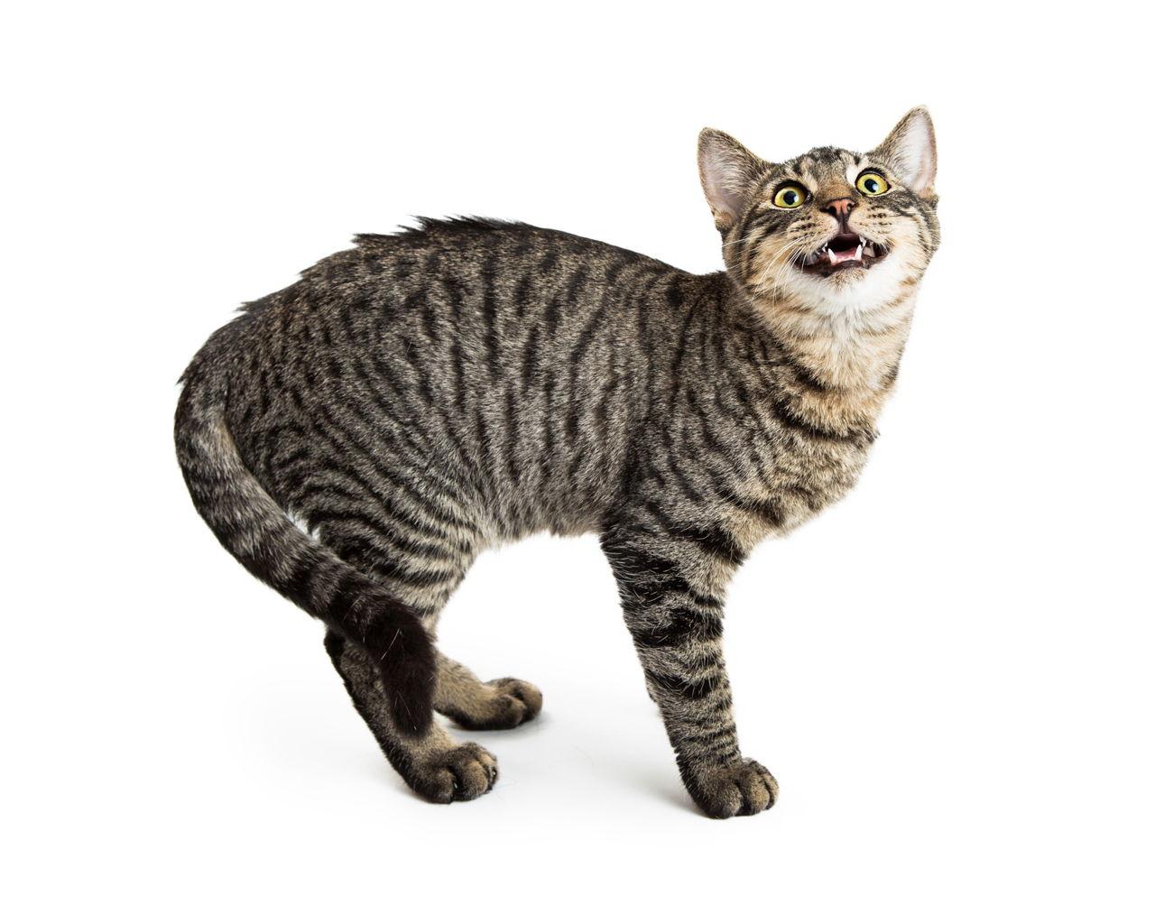 prescription diet cat food