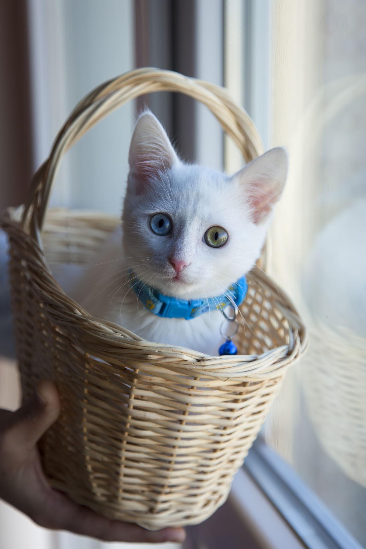 scoop away cat litter reviews