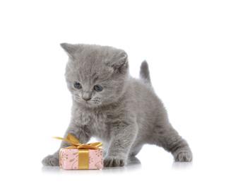 Kitten And Gift Box