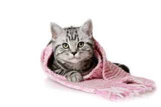 Pretty Kitten In Scarf
