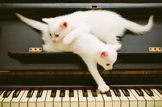 White Playful Kittens