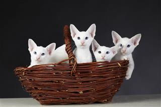 Kitty In Wicker Basket