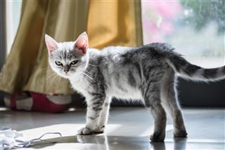 Cute Kitten In Home