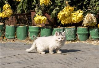 Little Kitty In Front Of Flower Pots