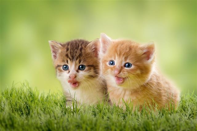 Two Kittens On Green Meadow