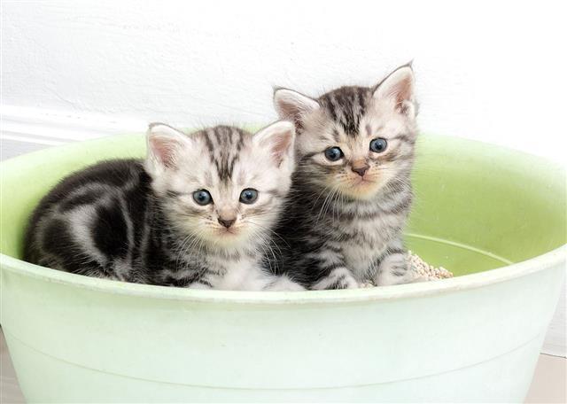 Kittens in tub