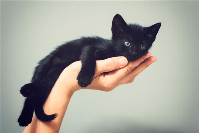 Five Weeks Old Kitten