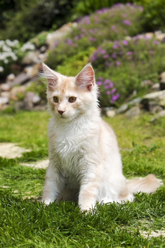 Little Kitty Sitting In Garden