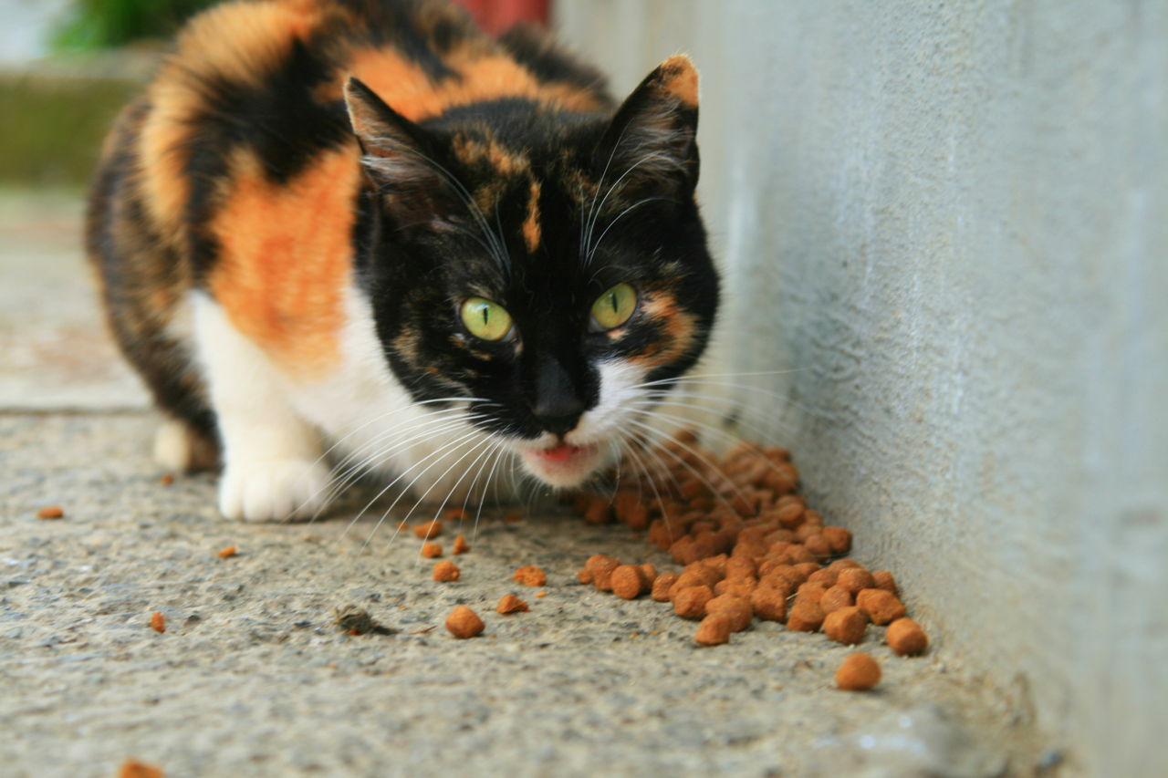 purina pro plan urinary tract cat food