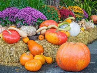 Pumpkin Decorations