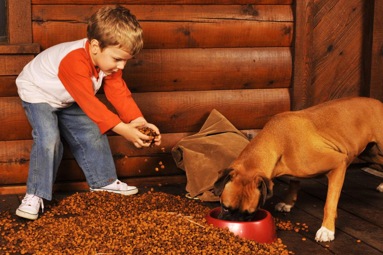 Dog Vomiting Yellow Bile And Food
