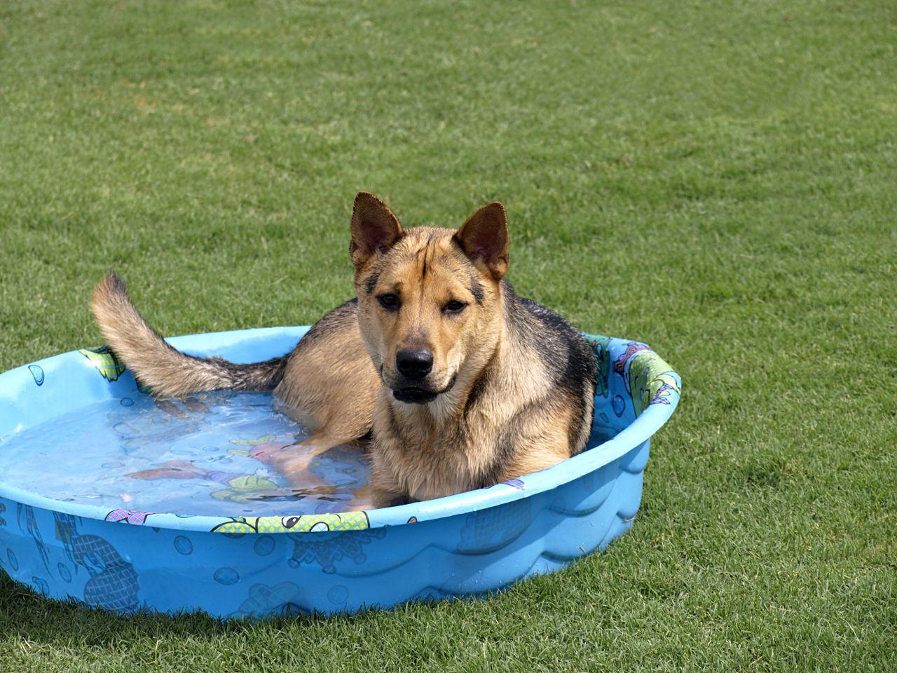 Dog Dandruff Shampoo Pets At Home