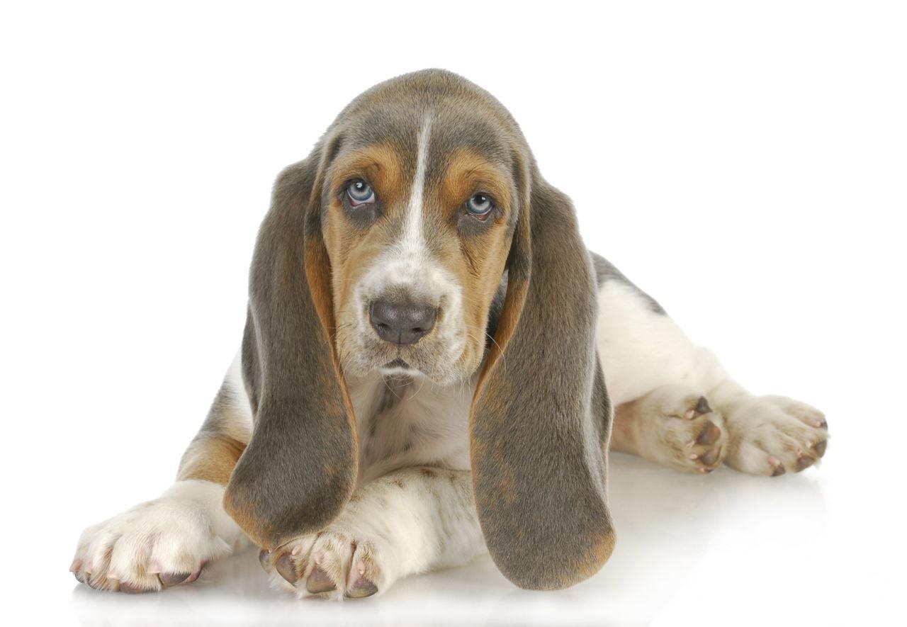 Must see Grey Blue Eye Adorable Dog - 1280-177504181-cute-puppy  2018_28985  .jpg
