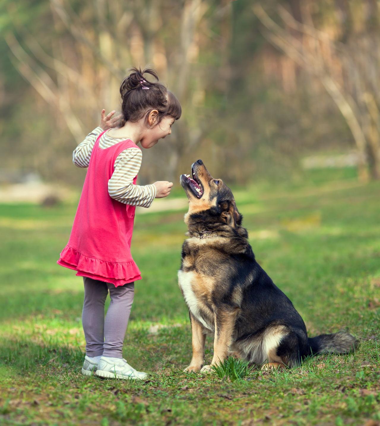 Resultado de imagen para german shepherd playing with kid