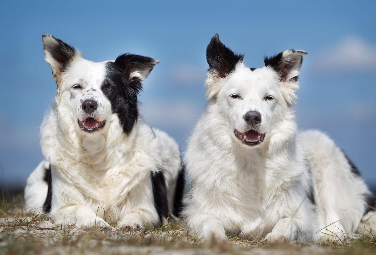 Better Nature Dog Training