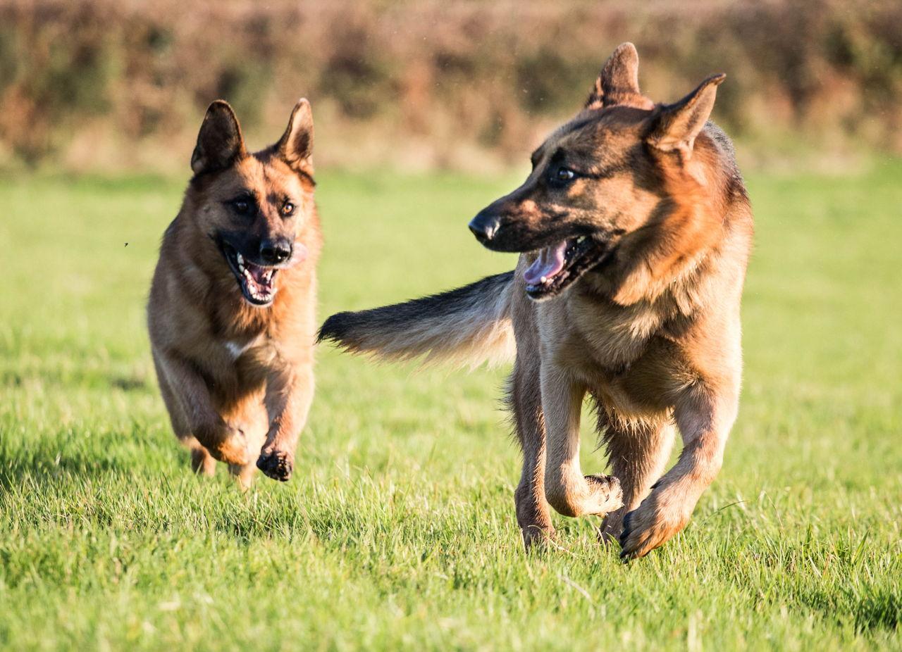 Dog House Training Techniques