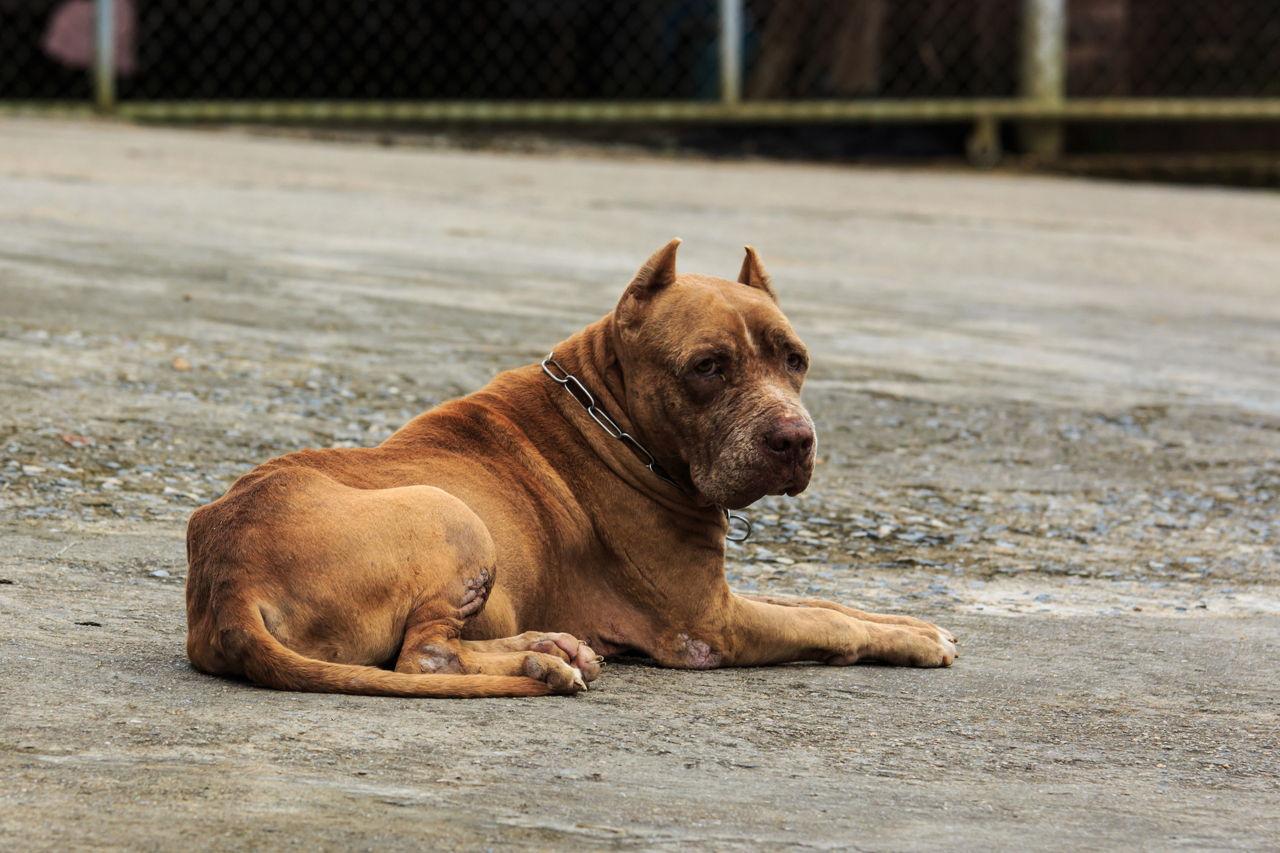 Breed Specific Dog Food Pitbull