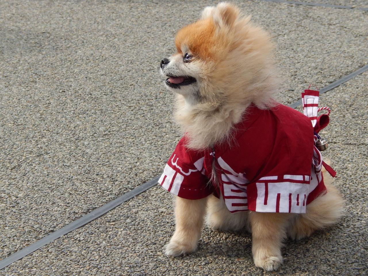 Hawaiian Pet Names For Dogs