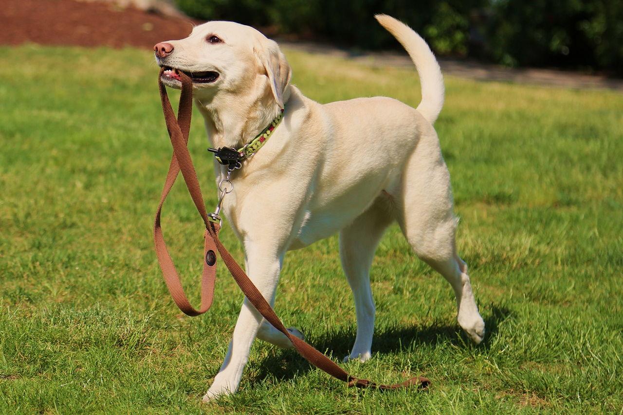 Designer Dog Kennel Club Ddkc