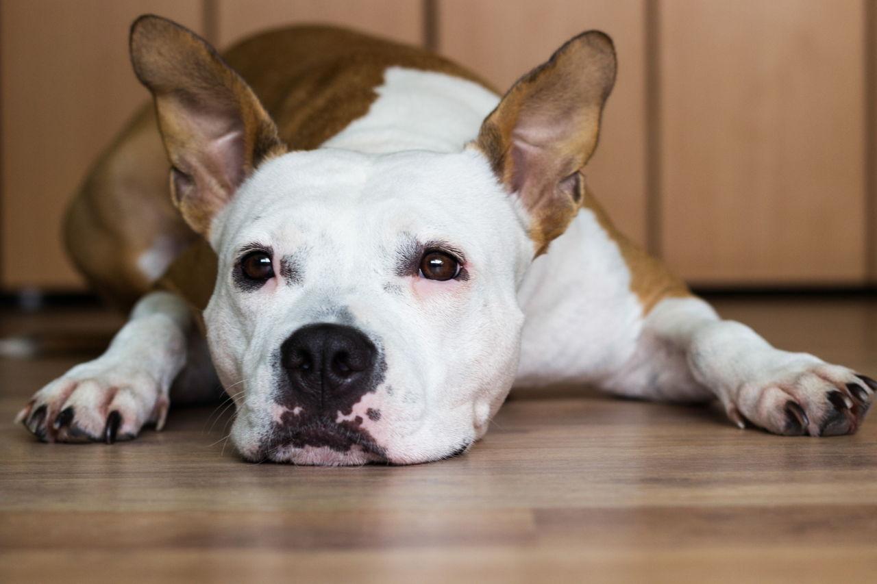 Hematemesis in Dogs