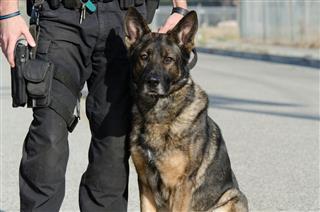 Police Canine