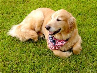 American Buddy