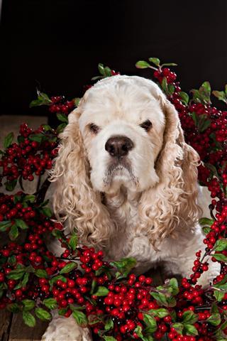 Christmas Card Dog