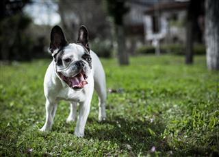 Dog Stand On Grass