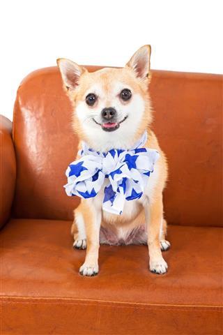 Patriotic Chihuahua </p><div class='code-block code-block-1' style='margin: 8px 0; clear: both;'> <div class='ai-adb-hide' data-ai-debug='1'> <script async src=