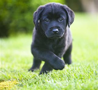 Running Puppy