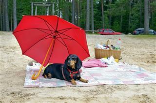 Sunbathing Dog