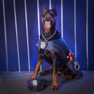 Doberman Pincher As A Police Officer
