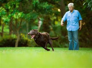 Senior Training His Dog