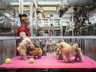 Pet Shop At Chatuchak Market Bangkok