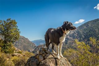 Border Collie Dog On Rocky Outcrop