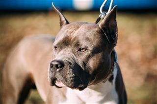 Closeup Of Beautiful Dog