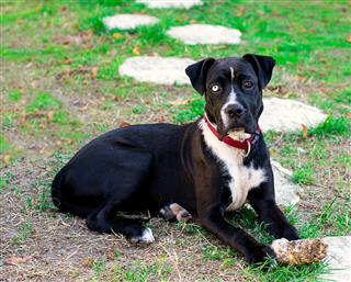 Puppy Cross Bred Dog