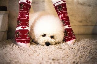 Small Dog Between Women Legs