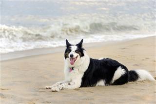 Dog Portrait On The Beach