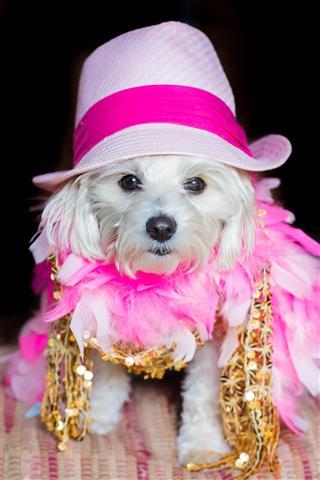 Dog Wearing Pink