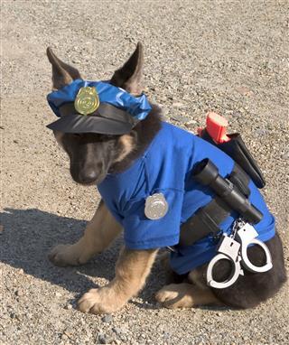 Cerberus Guard Dog Of Hades