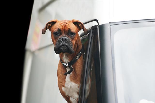 Stuck In Traffic