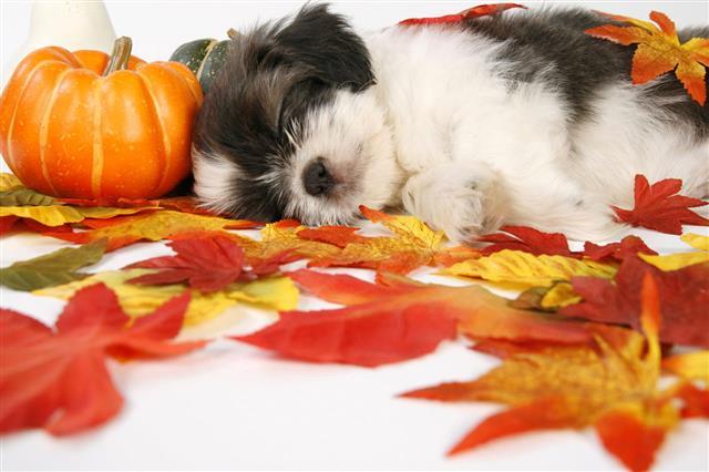 Autumn Cutie
