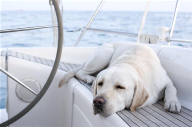 Boats Dog